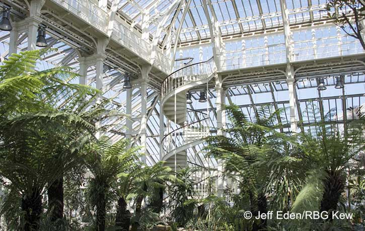 Kevin Graal news: Sunday Stories at kew
